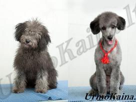 Šunų ir kačių kirpimo mašinėlės - nuotraukos Nr. 10