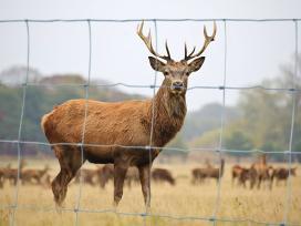 Avių , galvijų ,danielų ganyklų , miško aptvėrimai