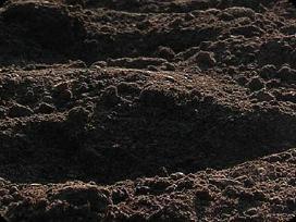 Juodzemis vejai, siltnamiui, darzui