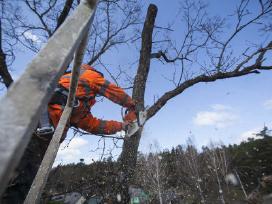 Medžių pjovimas genėjimas