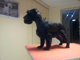 Šunų ir kačių kirpykla Šiauliuose Serbentų g 52 - nuotraukos Nr. 5