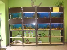 stendas su 8 akvariumais ir 8 lentynom .