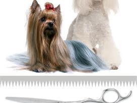 Šunų kirpykla Palangoje