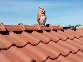 Stogų dengimas stogai, stogų remontas, skardinimas - nuotraukos Nr. 6
