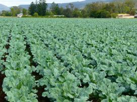 Darbas Anglijoje žemės ūkyje - nuotraukos Nr. 6