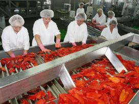 Darbas Anglijoje maisto produktų fabrik - nuotraukos Nr. 8