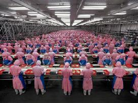 Darbas mėsos fabrike