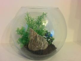 Mini akvariumai apvalūs
