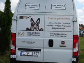 Licencijuotas tarptautinis gyvūnų pervežimas