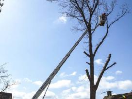 Medžių pjovimas, išvežimas Kaunas 50 proc nuolaida - nuotraukos Nr. 3