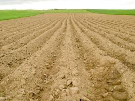 Tvarkome apleistus žemės sklypus