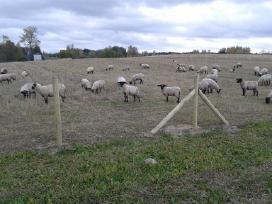 Avių aptvėrimui vielos tinklas ,el.piemuo ir .