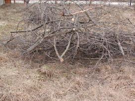 Išvežame: šakas, medieną, kelmus, iškertam medžius