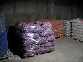 Seklines bulves (adora, vineta, mozart, melody)
