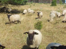 Lietuviška veršiena,aviena ir ėriena