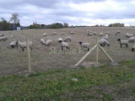 Sodų miškų, magistralių ganyklų aptvėrimai .tvora