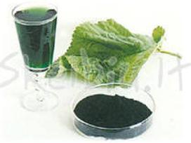 Chlorofilas- chlorophyl liquid nature's sunshine - nuotraukos Nr. 3