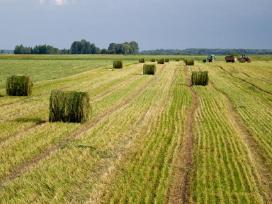 Kokybiškos sėklos ganykloms