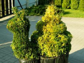 Dekoratyviniai Augalai, Skulptūros (Karpymas)
