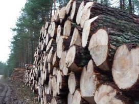 Brangiai superkame miškus visoje Lietuvoje