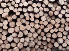 Brangiai superkame miškus ir medieną. - nuotraukos Nr. 8