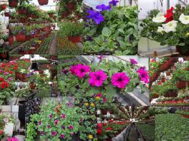 Jankauskų gėlininkystės ūkis
