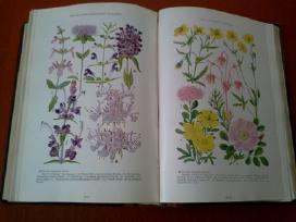 Knygos nacionaline geografija - nuotraukos Nr. 4