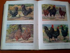 Knygos nacionaline geografija - nuotraukos Nr. 6