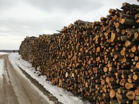 Brangiai superkame miškus ir medieną. - nuotraukos Nr. 9