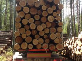 Brangiai superkame miškus ir medieną. - nuotraukos Nr. 6