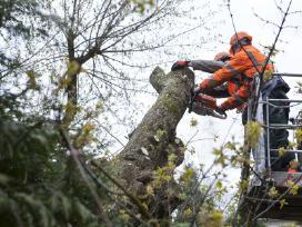 Medžių pjovimas, išvežimas Kaunas 50 proc nuolaida