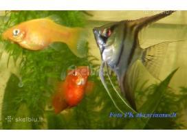 Įvairios žuvytės.