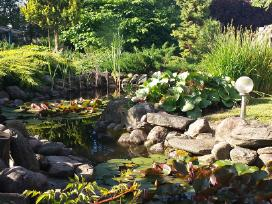 Ivairus dekoratyviniai augalai levandos tujos - nuotraukos Nr. 8