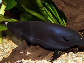 Žuvytės Pigiau