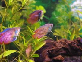 Atnaujinta! Įvairios žuvytės
