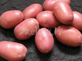 Bulvės, burokėliai pašarui 0,05 €/ kg