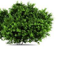 Krūmų, medžių kirtimas, apleistų žemių tvarkymas