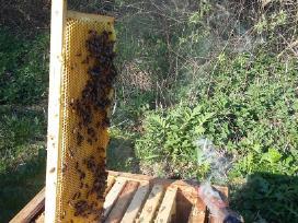 Bičių medus, Duonelė