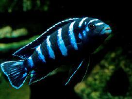 Įvairios žuvytės, pigiau - nuotraukos Nr. 4
