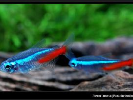 Įvairios žuvytės, pigiau - nuotraukos Nr. 3