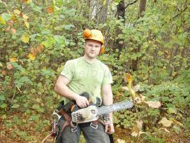 Pjaunu medžius / medžių pjovimas