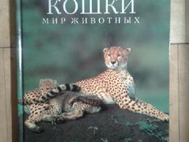 """Ispudingas albumas """"Bolsyje Koski"""" 1995m."""