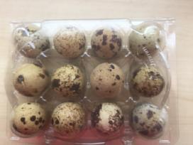 Inkubaciniai putpelių kiaušiniai - nuotraukos Nr. 3