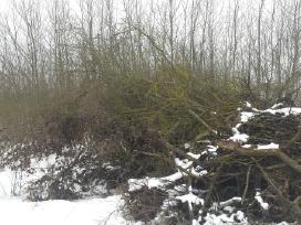 Medžių šakų išvežimas su pakrovimu 20kūb.m.