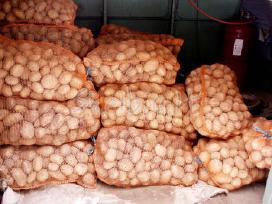 Maistinės,sėklinės bulves,ir kitos daržovės
