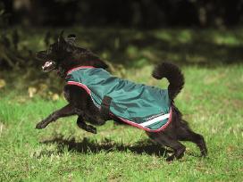 Kokybiški apsiaustai šunims, nuo Xxs iki Xxl