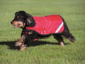 Kokybiški apsiaustai šunims, nuo Xxs iki Xxl - nuotraukos Nr. 3