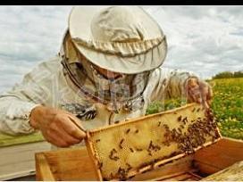 Bitininkas parduoda grikių Medų