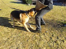 Šunų dresūra-iškilusių problemų sprendimas. - nuotraukos Nr. 6