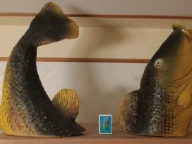 Žuvis iš dviejų dalių